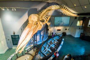 nantucket whaling museum_history of nantucket island massachusetts