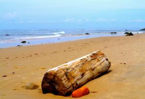 log on beach in aquinnah massachusetts_cape cod tourism
