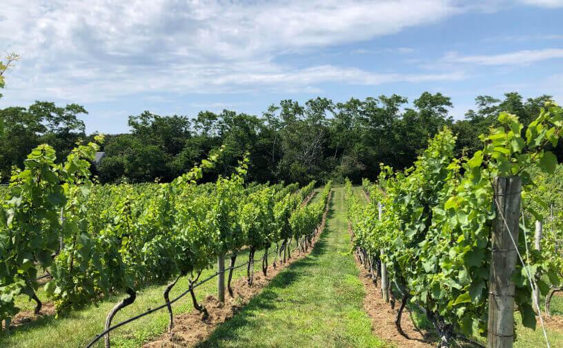 Truro Vineyards of Cape Cod (North Truro)