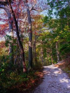 Beech Forest Trail_Beech Forest Cape Cod