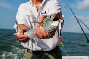 cape cod boat charters_cape cod fishing_fishing by boat