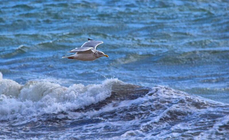 bird watching cape cod