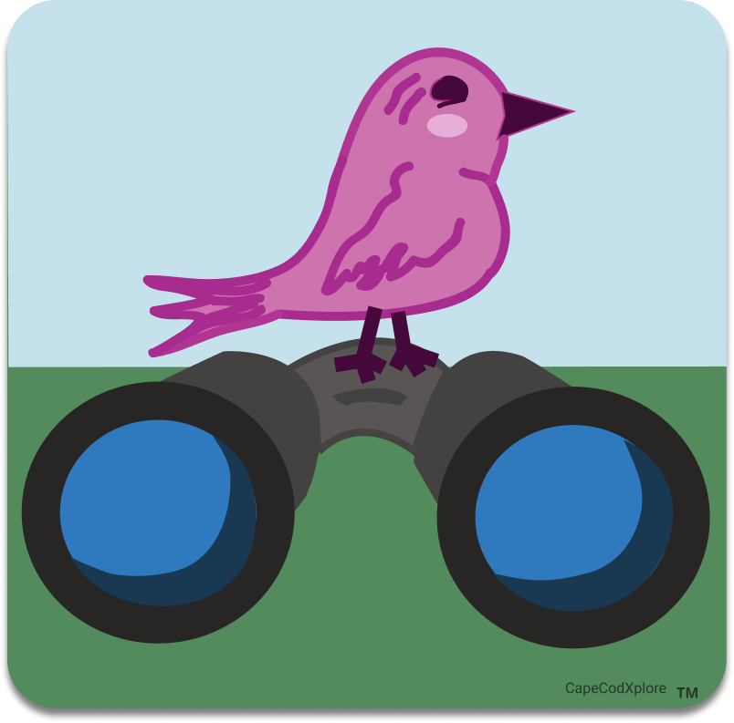 cape cod_icon for bird watching