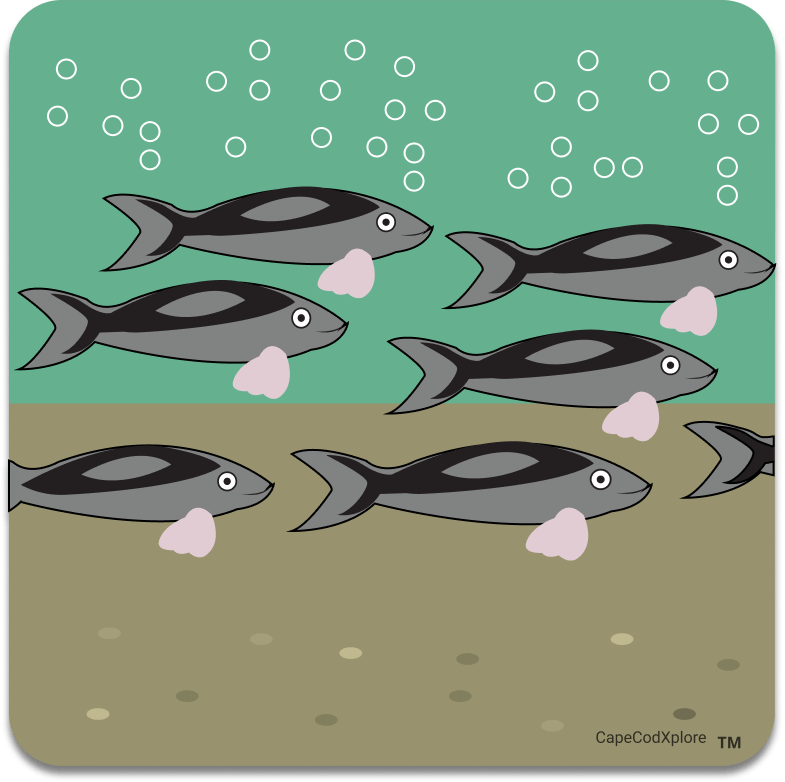 Cape Cod_icon for herring run