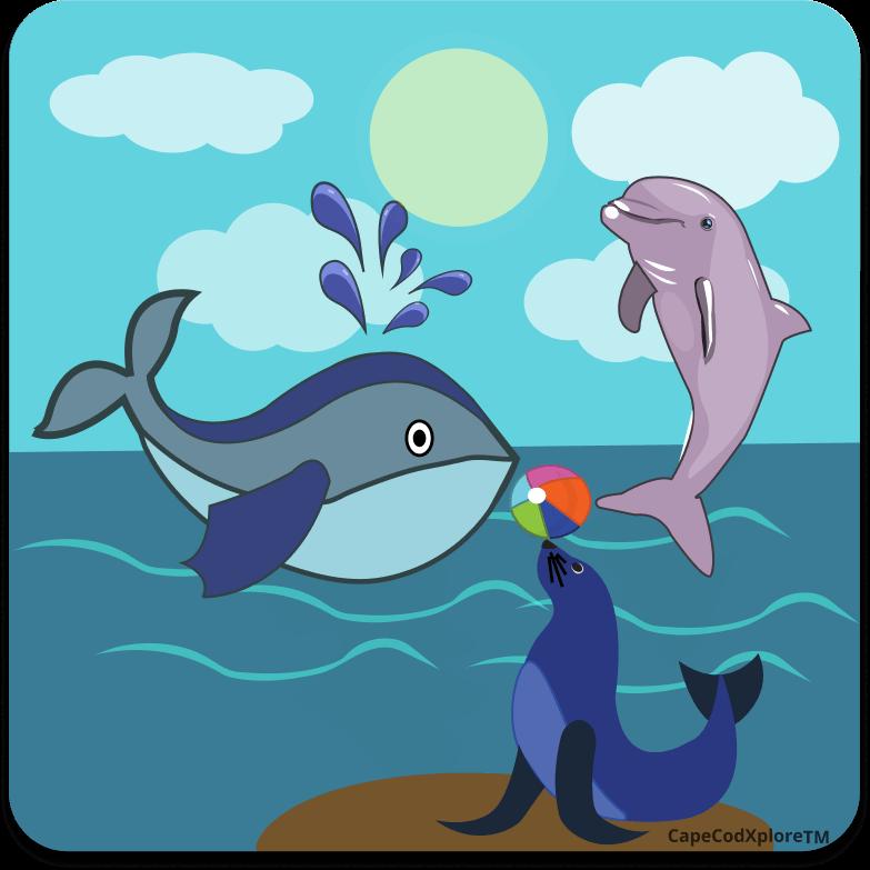 cape cod_icon for marine life