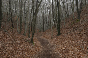 Beech Forest Trail in Cape Code