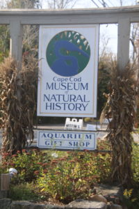 cape cod museum of natural history_cape cod museum gift shop