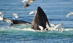 ecotourism in cape cod_cape cod activities
