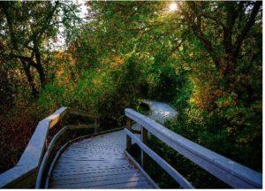 hiking trails 03