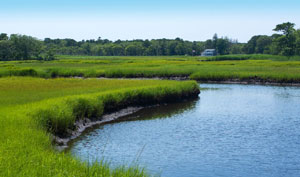 photo of cape cod herring run_things to do on cape cod