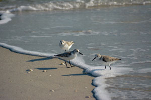 audubon wellfleet bay wildlife sanctuary_five miles of trails