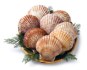 oysters_cape cod shellfish_cape cod farms_cape cod aquaculture