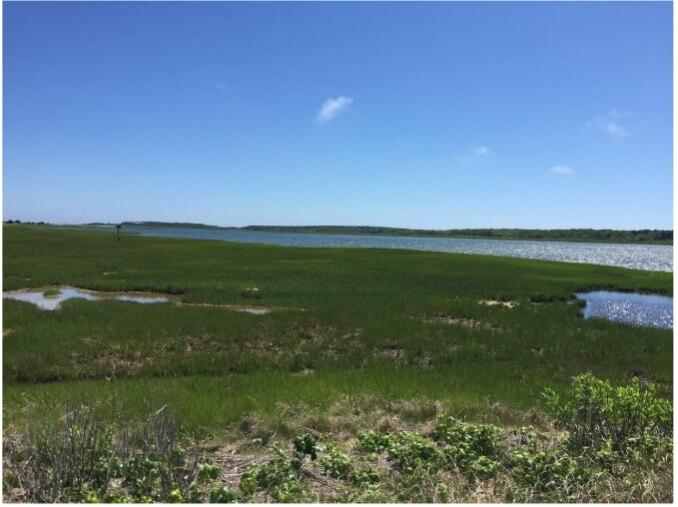 marsh near chappaquiddick island
