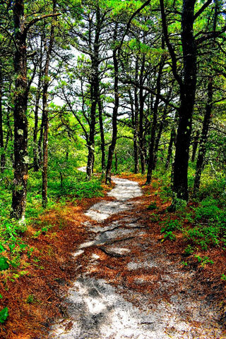 Photo of Atlantic White Cedar Swamp Trail_hiking trails in Cape Cod