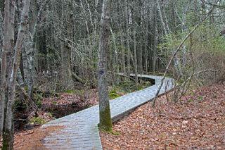 Atlantic White Cedar Swamp Trail boardwalk_hiking in Cape Cod