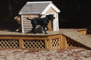 cape cod dog park_parks in cape cod