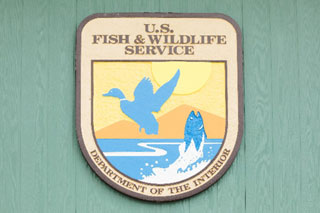 us fish and wildlife service sign_endangered piping plover_cape cod birds
