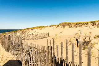 area of beach where endangered piping plover nest_piping plover cape cod