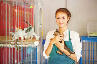 image of volunteer holding a kitten_volunteering at an animal shelter on cape cod and the islands_cape cod volunteer opportunities