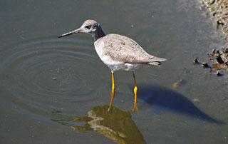 photo of bird at wellfleet bay wildlife sanctuary