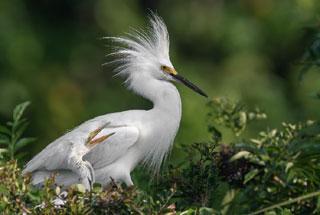 a bird at mass audubon wellfleet bay wildlife sanctuary