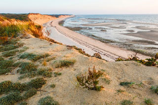 try island trail_best trails in well fleet bay wildlife sanctuary