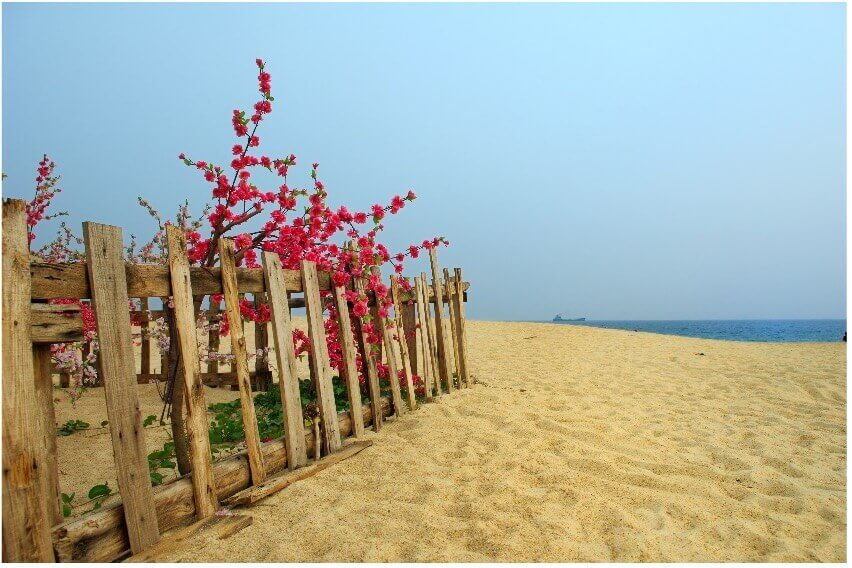 sandy beach with fence on cape cod beach_things to do on cape cod