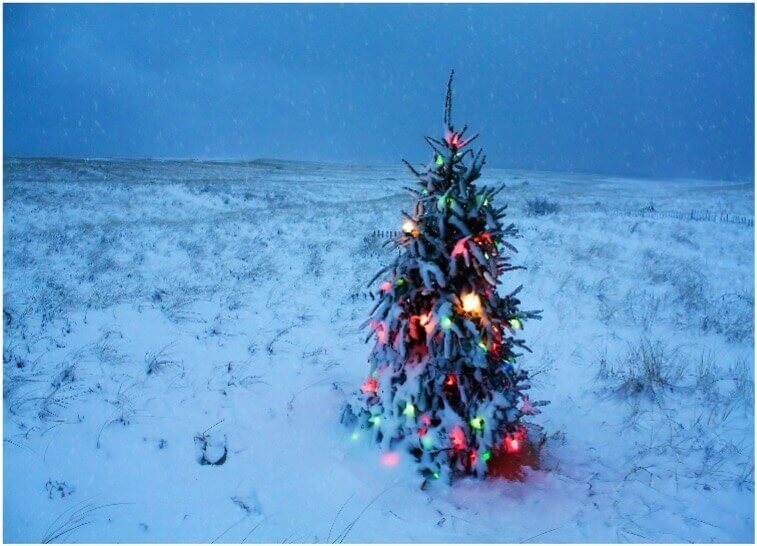 decorated outdoor christmas tree surrounded by snow in cape cod massachusetts