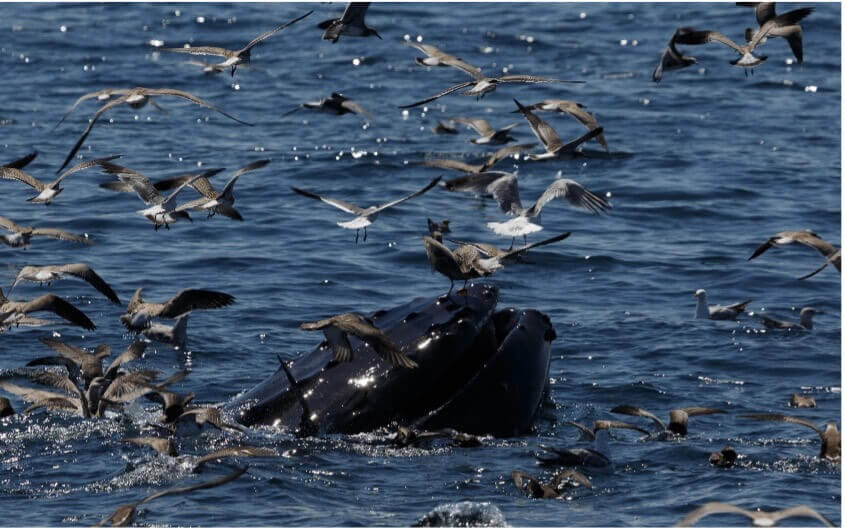 whale and birds in water in cape cod massachusetts_things to do on cape cod