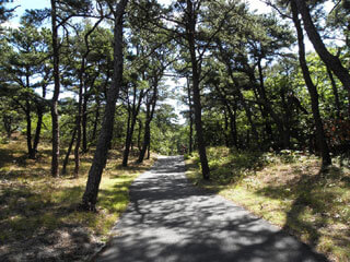 trail in cape cod_things to do on cape cod