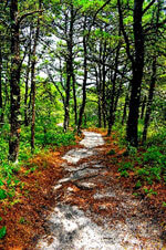 photo of trail with leaves in cape cod_best hikes on cape cod_things to do in cape cod
