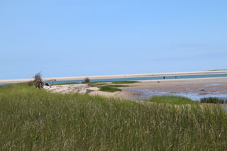 morris island trail in cape cod_best hikes on cape cod_things to do on cape cod