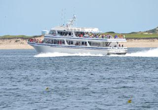 boat tour on cape cod_cape cod marine life_cape cod boat tours_things to do on cape cod