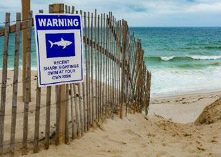 shark warning on beach_great white sharks in cape cod