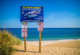 shark warning sign on beach_why are sharks coming to cape cod