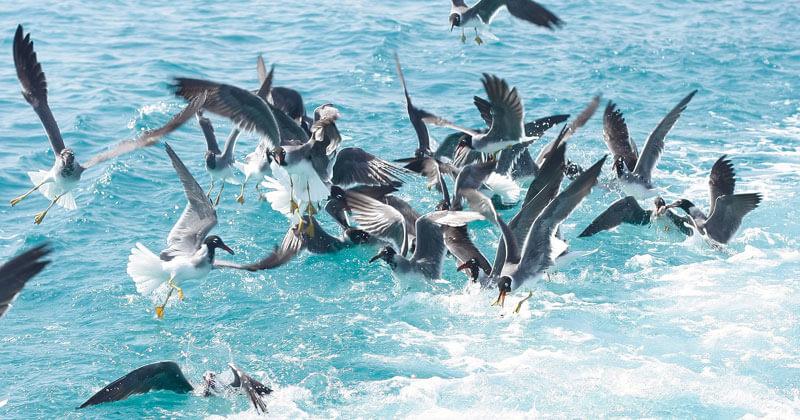 birds landing on water_cape cod tourism