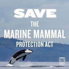 save the marine mammal protection act image_great white sharks in cape cod_why are sharks coming to cape cod