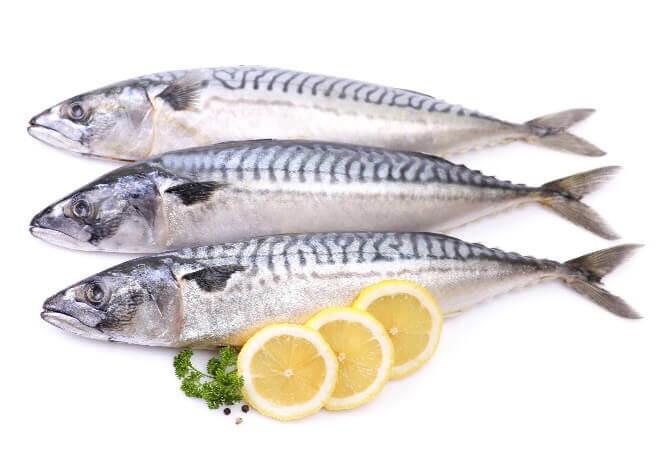 mackerel_fishing in cape cod