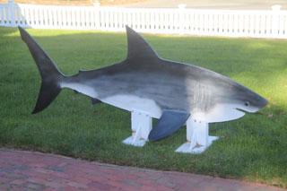 statue of shark at chatham shark center_atlantic white shark conservancy_chatham shark museum