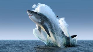 great white shark_chatham shark center_chatham shark museum_atlantic white shark conservancy