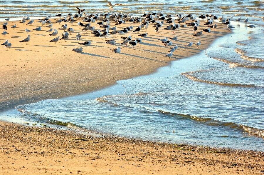 cape cod bird sanctuary
