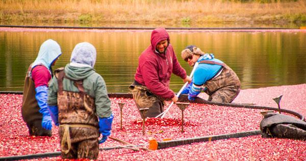 4 photogenic cape cod cranberry tours