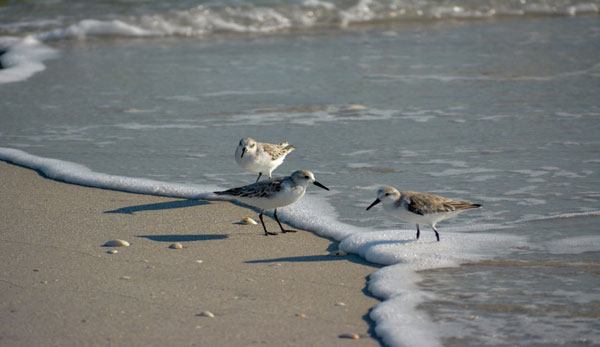 migratory and overwintering birds of cape cod